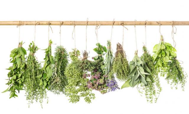 erbe aromatiche in offerta